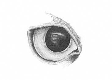 Creative Eye Drawing