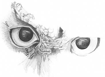 Owl Eyes Black And White Drawing Images Free Download