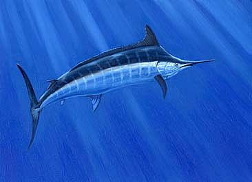 Blue Marlin -  by Setsuo Hamanaka