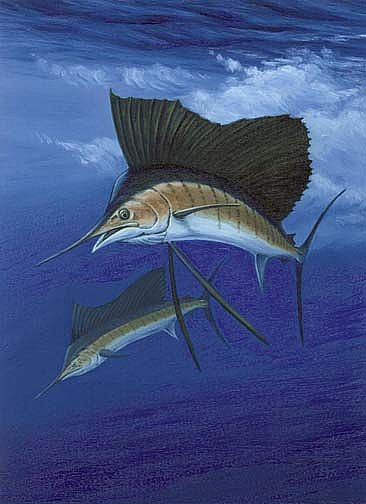 dive - Sailfish by Setsuo Hamanaka