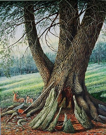 Regeneration - Regeneration of ancient hemlock by C. Frederick Lawrenson