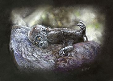 On for the Ride - Baby gorilla by Geraldine Simmons