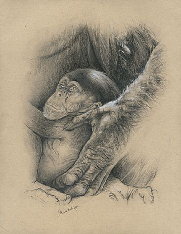 In Safe Hands - Baby Chimpanzee  by Geraldine Simmons