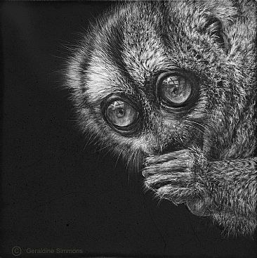 Nocturnal Treasure - Owl Monkey by Geraldine Simmons