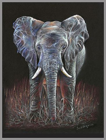 Evening Sun - African Elephant by Geraldine Simmons
