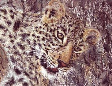 Young Leopard -  by Angela Drysdale
