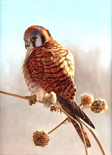 Female American Kestrel - Painting Art by Larry Chandler