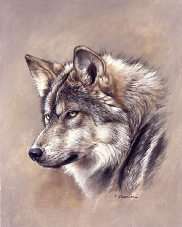 Mexican gray wolf mexican gray wolf head study by larry chandler