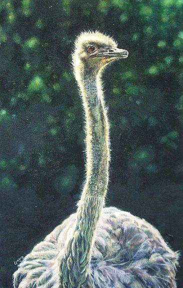 Ostrich -  by Gregory Wellman
