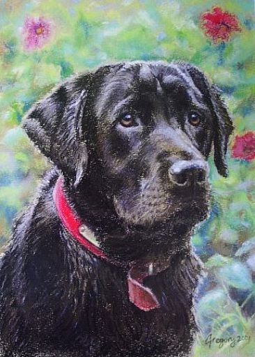 Black Jack - Chocolate Brown Labrador by Gregory Wellman