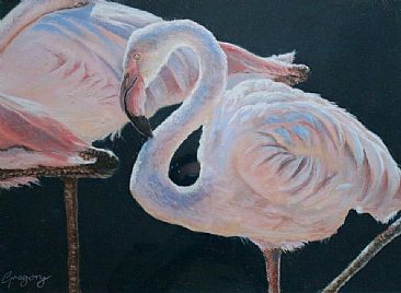 Pink & Black - Lesser Flamingos by Gregory Wellman