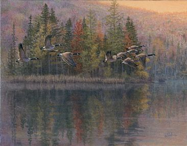Autumn flight - Canada Geese by Pierre Leduc