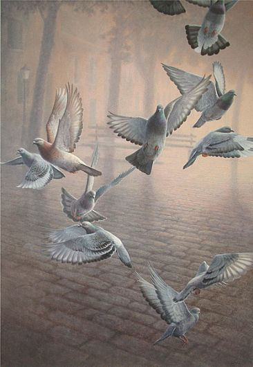 The great ballet - Rock Doves, Pigeons by Pierre Leduc