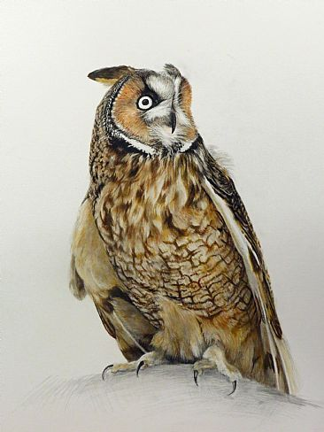 Oberon - Long-eared Owl by Dennis Curry