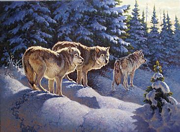 Winter Wary - Grey Wolves by Jack Koonce