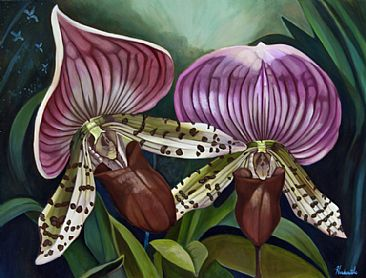 napoleon and josephine - slipper orchids by Thomas Hardcastle