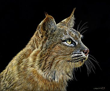 Bobcat - Bobcat by Rick Wheeler