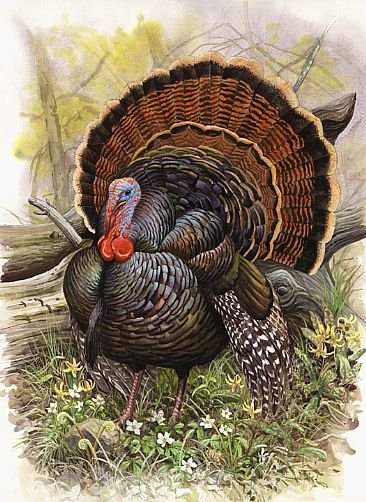 [Image: 1080_Wild-Turkey-.jpg]