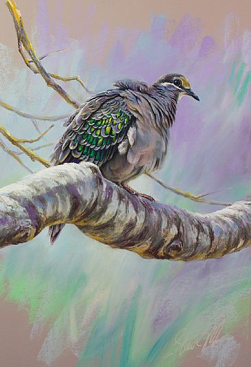 'Bronze beauty - Common bronzewing pigeon' - bronzewing pigeon on branch by Steve Morvell