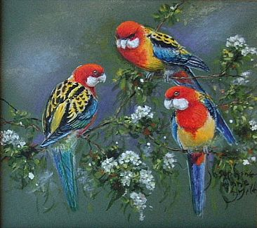 Eastern Rosellas - Rosellas by Josephine Smith