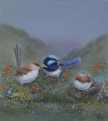 Superb blue wrens - Wrens by Josephine Smith