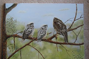 Frogmouth family - Frogmouth family by Josephine Smith