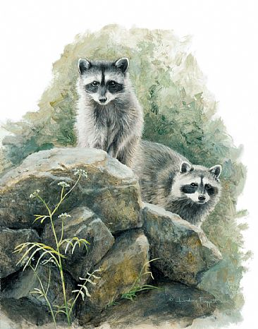 King of the Castle - Raccoons by Lindsey Foggett