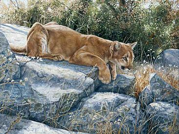 Rising Tension  - Mountain Lion by Lindsey Foggett
