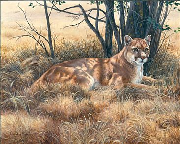 American King - Mountain Lion by Lindsey Foggett