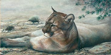 Interrupted Siesta - Mountain Lion by Lindsey Foggett