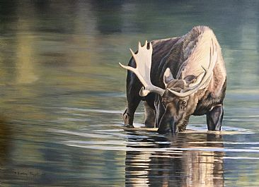 Peaceful Solitude - Moose by Lindsey Foggett