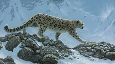 Snow Leopard -  by Hans Kappel