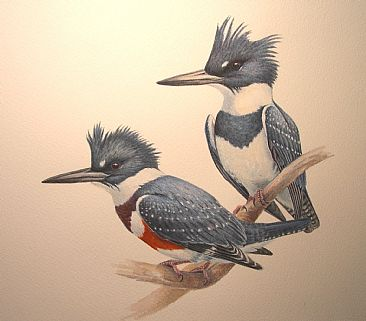 Belted kigfishers - Belted Kingfishers M&F by Jon Janosik