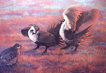 Sage Cocks Fighting - Greater Sage Grouse;Centrocercus urophasianus by Jon Janosik