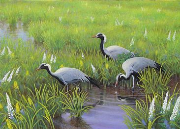 Demoiselle Cranes in Spring - Demoiselle Cranes; Anthropoides virgo by Jon Janosik