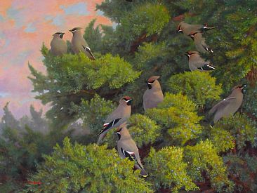 Evening Waxwings - Bohemian Waxwings; Bombycilla garrulus by Jon Janosik