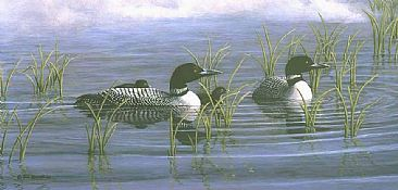 Morning Mist: Loon Family - Common Loon- Adults and Young, Gavia immer; Minnesota by Jon Janosik