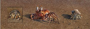 Beachfront Property - Hermit and Ghost Crabs by David Kitler