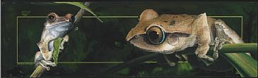 Madagascar - Creatures of the Night I - Frog by David Kitler