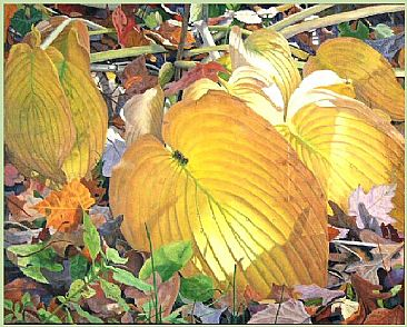 Golden Hostas - Golden Hostas in Sunlight by  Harlan