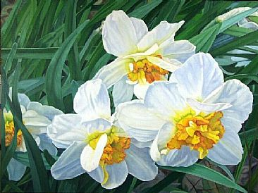 Narcissus - White Narcissus in sunlight by  Harlan