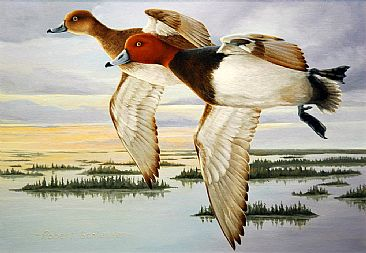 Early Morning Redheads - Redhead Duck by Robert Schlenker