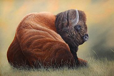 Bison - Bison  by Robert Schlenker