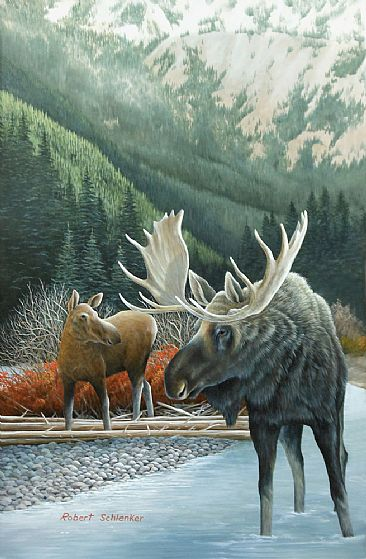 Moose on the Gallatin - Moose  by Robert Schlenker