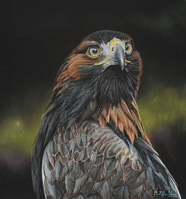 Orla, Golden Eagle - Female Golden Eagle by Martin Scuffins