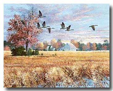 HARVEST SONG    - CANADA GEESE by George Shumate