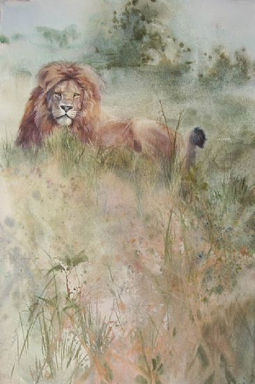 Lion in the Grass - male African Lion by Linda Sutton