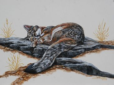 Daydreamer - Grey Fox by Leslie Kirchner