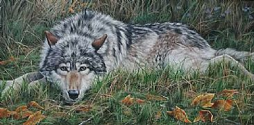 Autumn Morning  - Grey Wolf by Leslie Kirchner