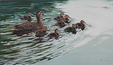 Leading From Behind  - Pacific Black Ducks by Lyn Ellison